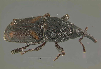 get rid of weevils