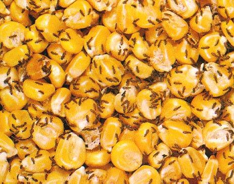 Corn Flour In Cat Food